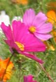 jachere-fleurie-b - copie 2